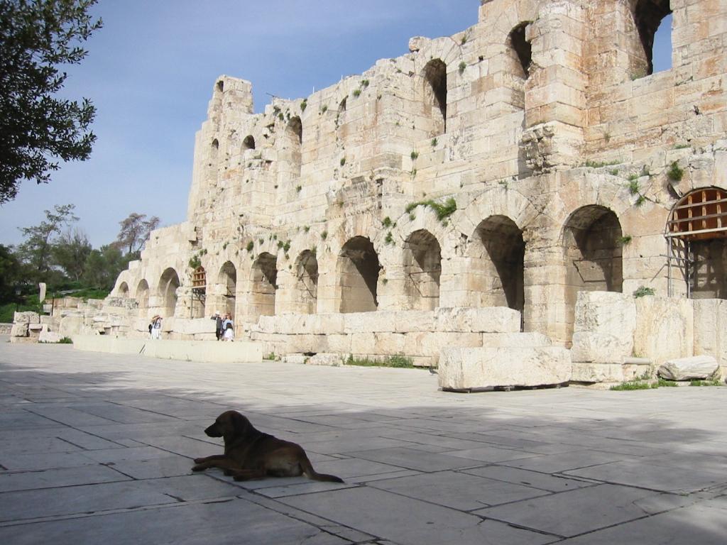 Ένας σκύλος στο Ηρώδειο......